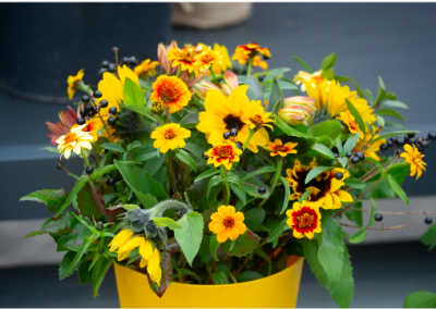 photo-fleurs