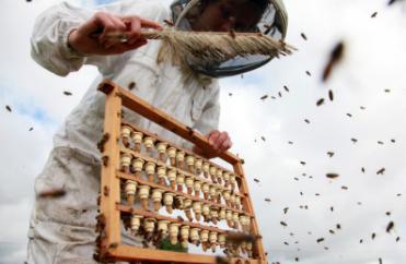 abeilledumont-4