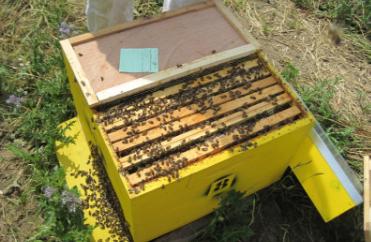 abeilledumont-8